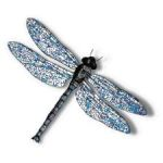 Dragonfly Results